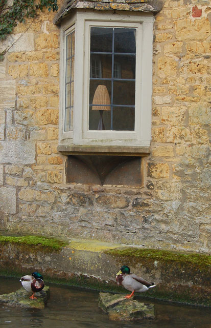 Ducks below an oriel window, Bourton