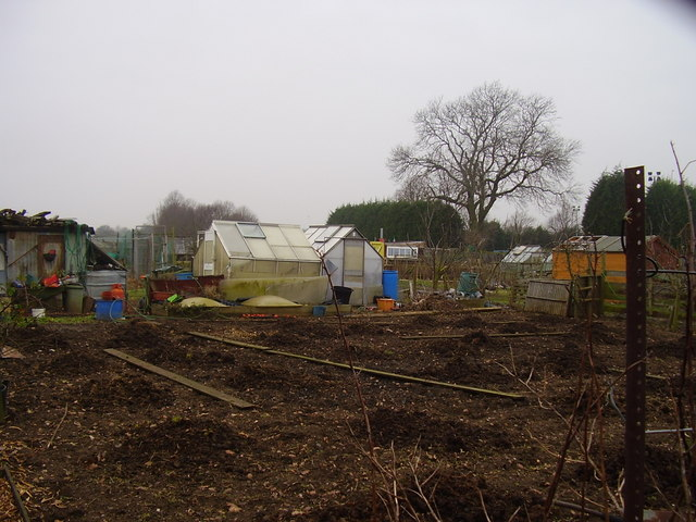 A quiet  day at the allotments.
