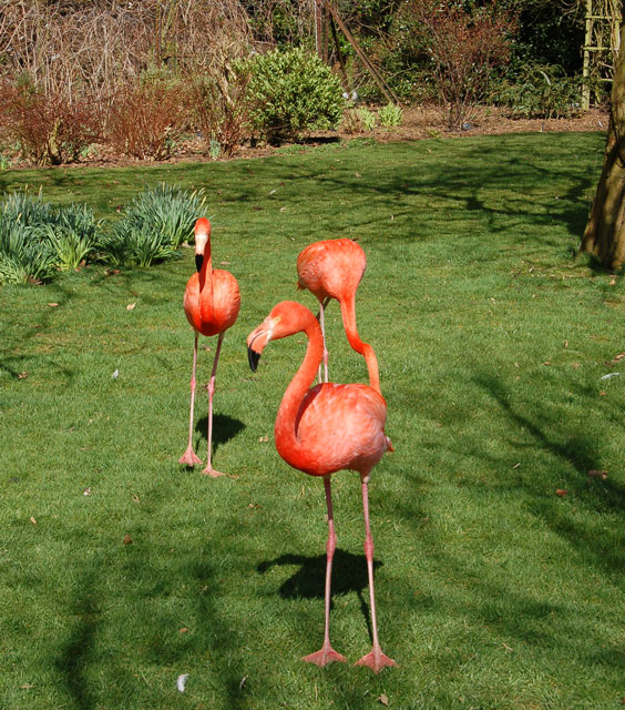 Flamingos at Coton Manor Gardens