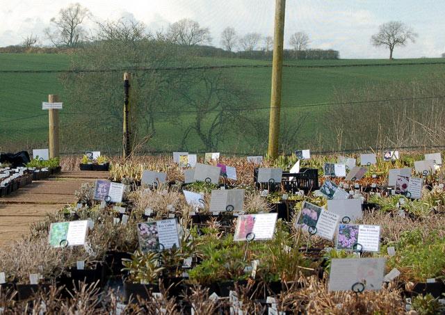 Plant sales area at Coton Manor Gardens