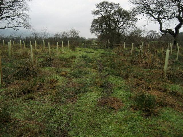 Following a Track towards Clough Bottom