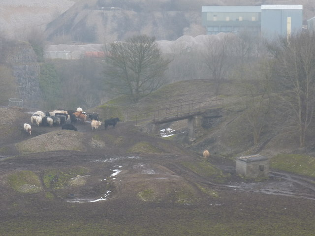 Herd of cattle in a disused quarry