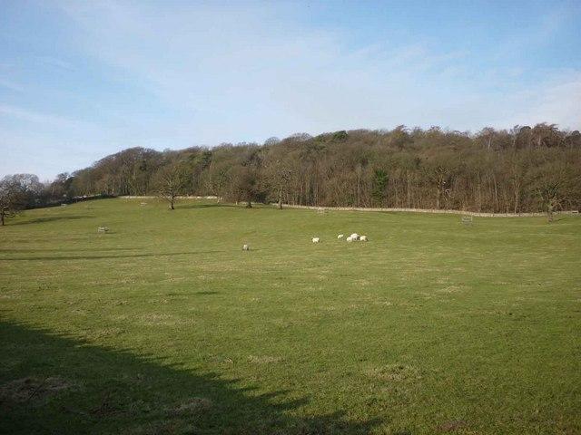 Sheep pasture below Eaves Wood, Silverdale