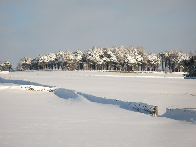 Plantation on Green Hill in the snow