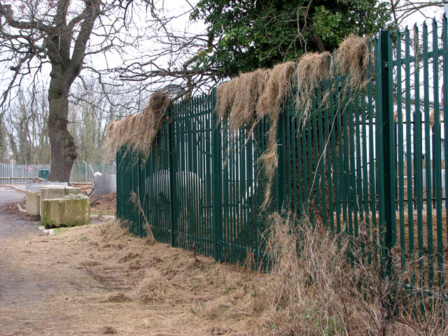 Security fence adorned with hay