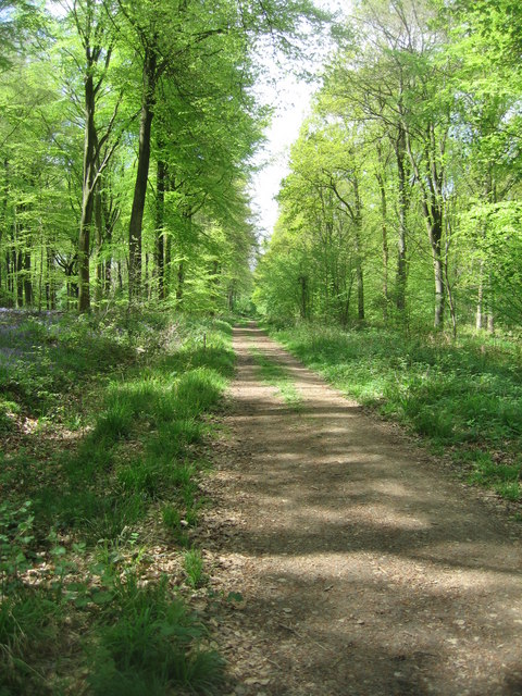 Track - Micheldever Woods