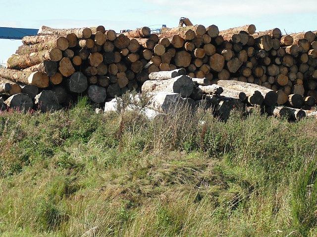 Timber stacks, Irvine pulp mill
