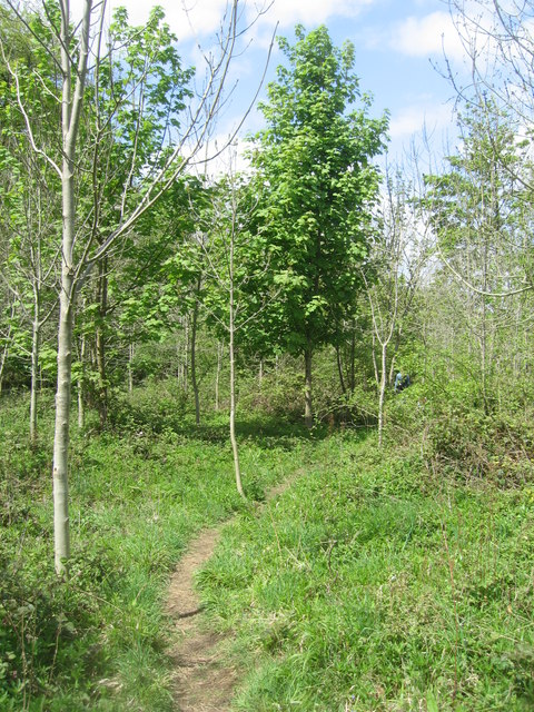 Path through some Ash trees