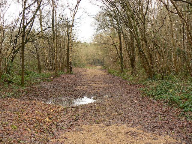 Bridleway, Bushy Grove, near Breadstone