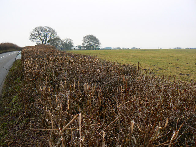 Hedge, Yorkley Lane, west of Oldcroft