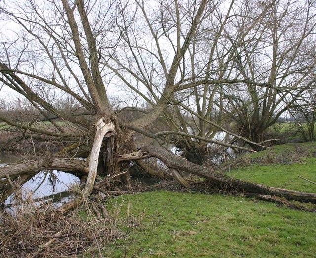 Trees alongside the River Soar, Quorn