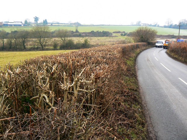 Hedge west of Yorkley Lane on its way towards Yorkley