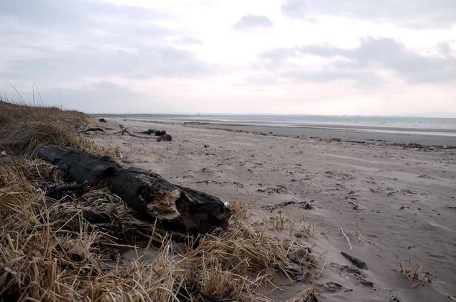 Driftwood on Troon South Sands