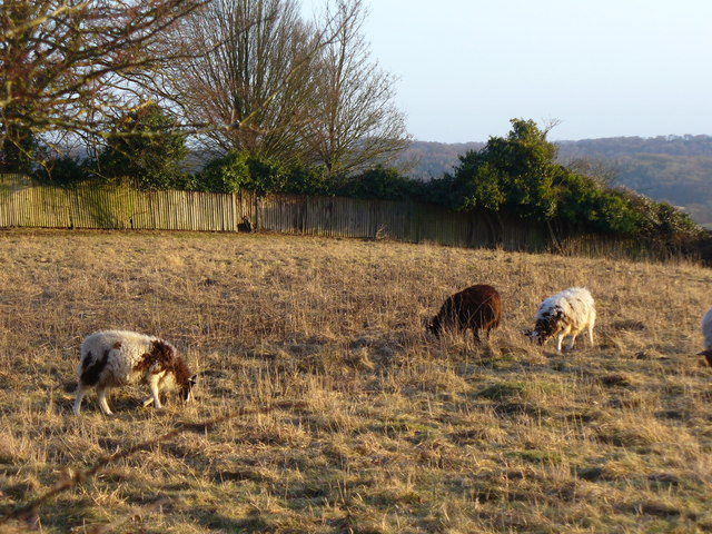 Grazing on Cobstone Hill