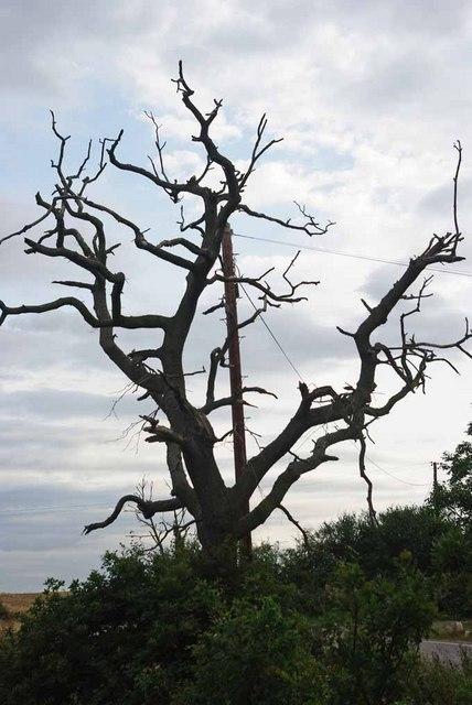 Dead Wood Near Park Farm