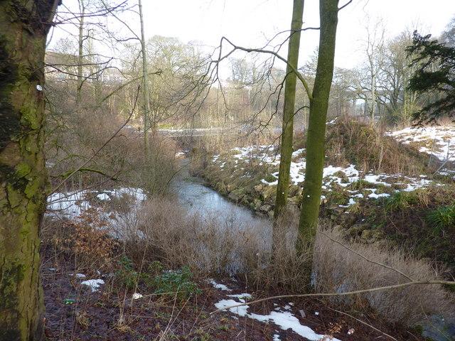 Woodland stream in Buxton