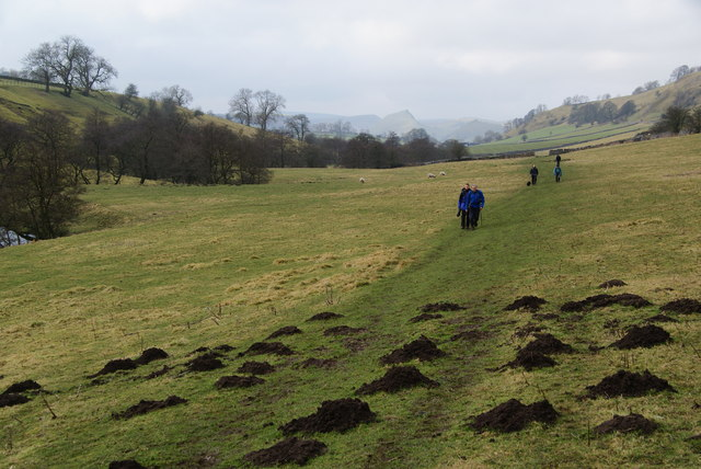 Mole activity in Dovedale