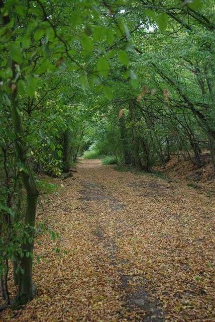 Bladens Wood Bridleway