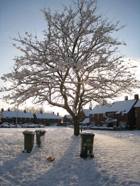 Snow clad tree - Norden Close