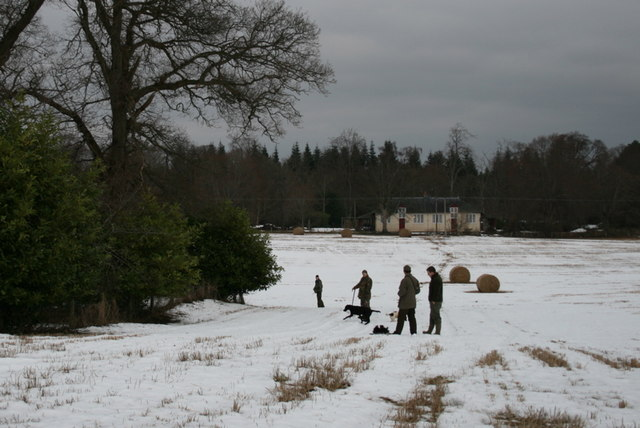 Beaters prepare to enter the wood at Wardend