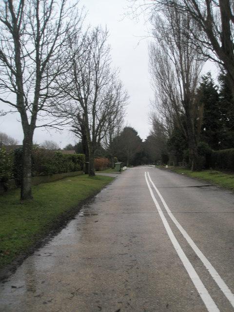 Winter trees in Pigeonhouse Lane