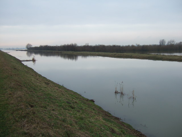 A copse on The Ouse Washes north of Earith