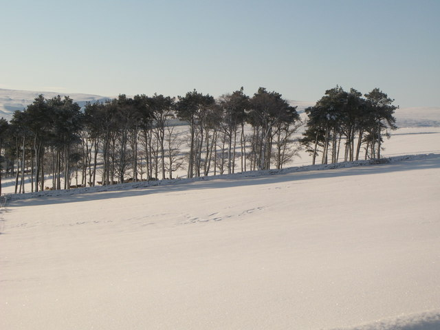 Plantation above East Garret's Hill Farm in the snow
