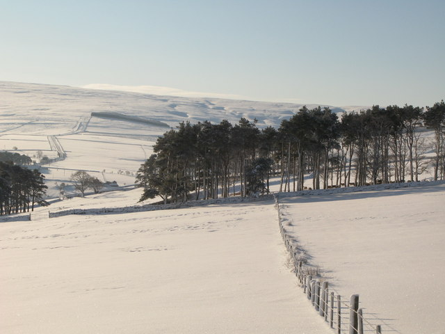 Plantation above East Garret's Hill Farm in the snow (2)