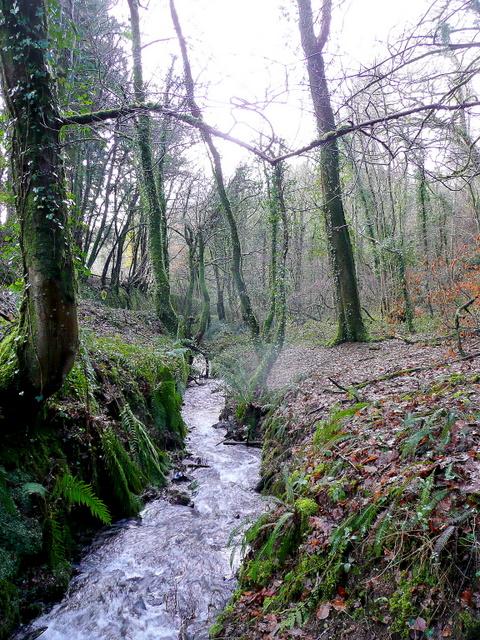 Stream through Poldew Wood