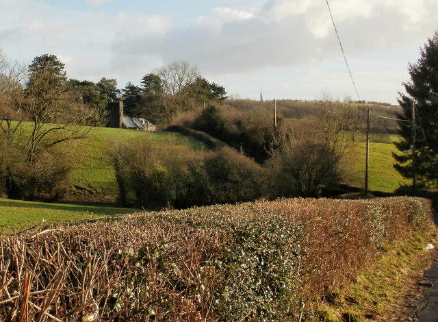 Hedges bordering Church Lane, Panteg