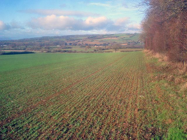 Arable land near Washbourne Hill