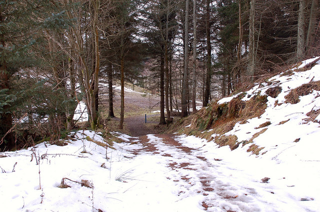 Track junction in Glentress Forest