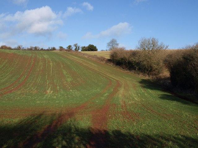 Field below Brownscombe Wood