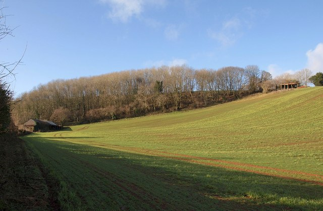 Brownscombe Wood