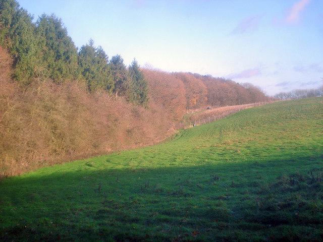Meadow near Oakhill Wood