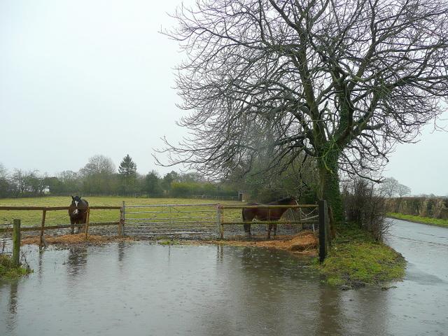 Wet paddock
