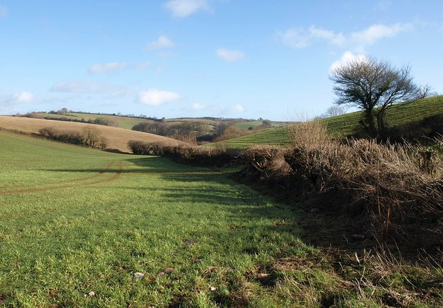 Field below Brownscombe Wood