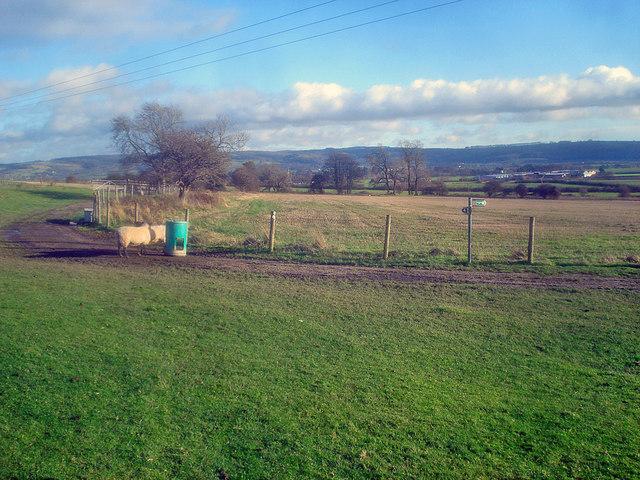 Farm track near Frampton Farm
