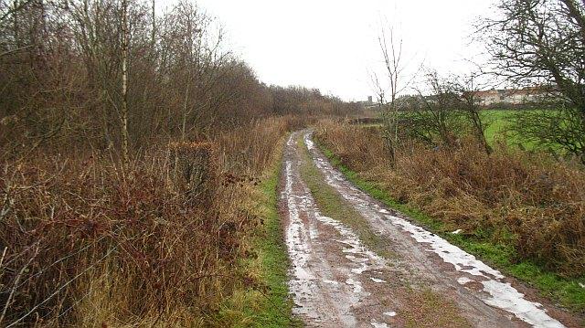 Road, Faskine Community Woodland