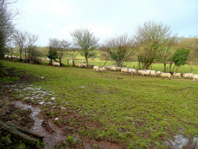 Sheep pasture by Brown's Lane