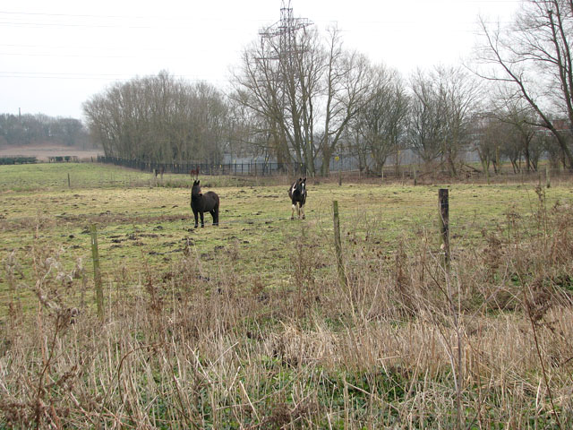 Pastures east of the River Yare