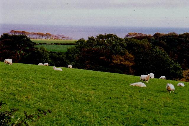 Sheep grazing on a hillside near Ballaskeig Beg