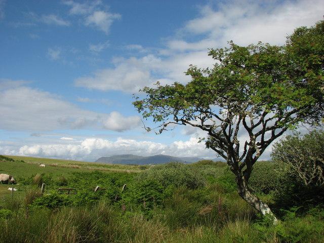 Lone tree by Torr Mor