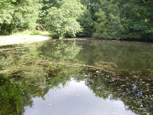 Pond in Wharncliffe woods