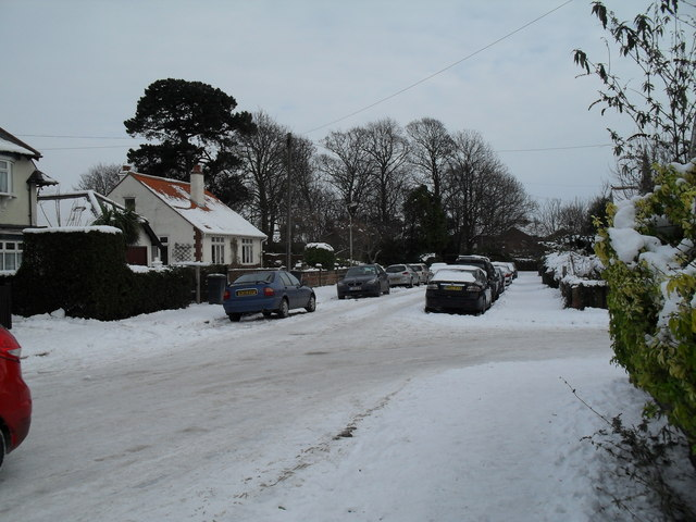 Winter trees in Grove Road