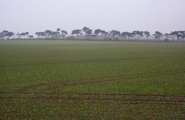 Field towards line of trees near Buckanay Farm