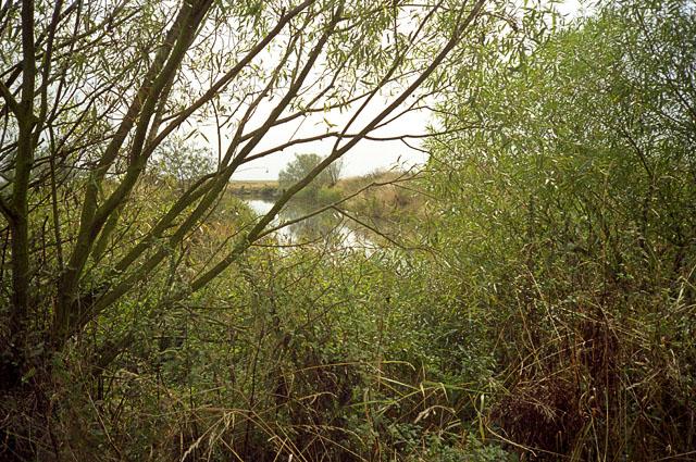 Abbotts Hall Farm dyke in 2000
