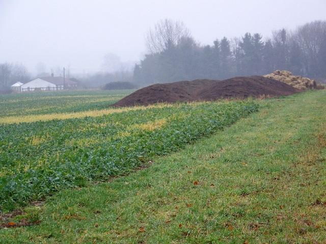 Root crop near Martin
