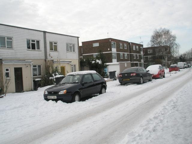 A snowy Juniper Square (12)