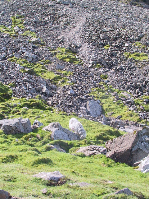 Screes at the base of the Lord's Rake, Scafell